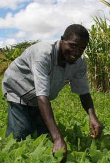 Malawian farmer