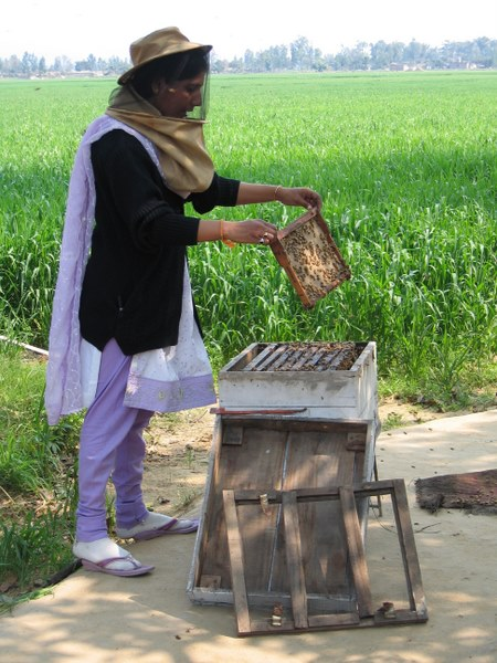Beekeeping, Uttarakhand, India